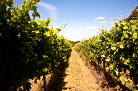 2012 Ridgeview Vineyard and Winery tour