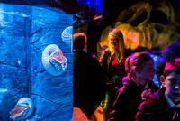 2015-01-11 Jurassic Seas at SeaLife Brighton: Launch