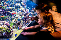 2016-07-15 Finding Dory at SEALIFE Brighton