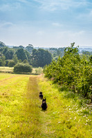 2014-07-25 Walkies with Rebus, Radley and Clare